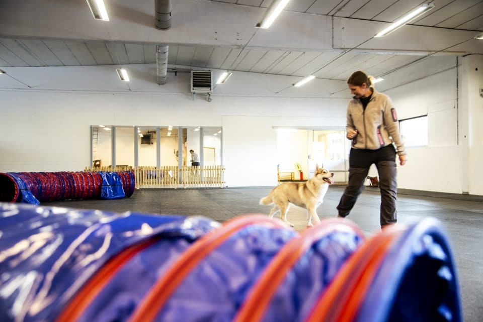 inomhushall för hundträning