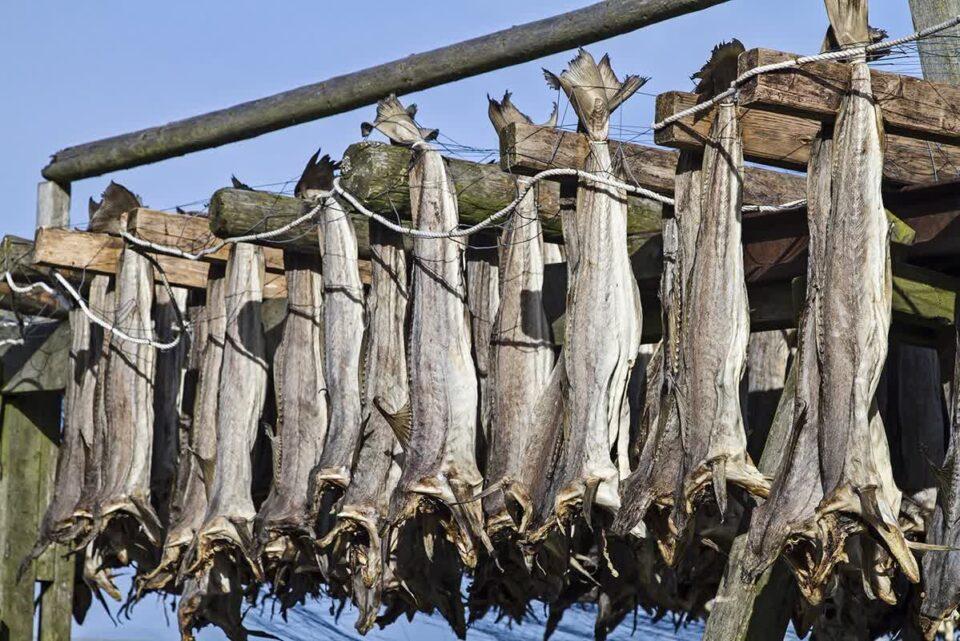 Torkad fisk som är grunden till lutfisk