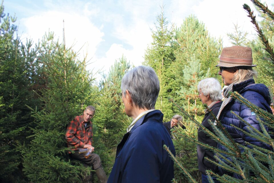 Skogssällskapet i skog